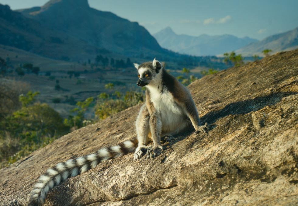 Лемур на о.Мадагаскар