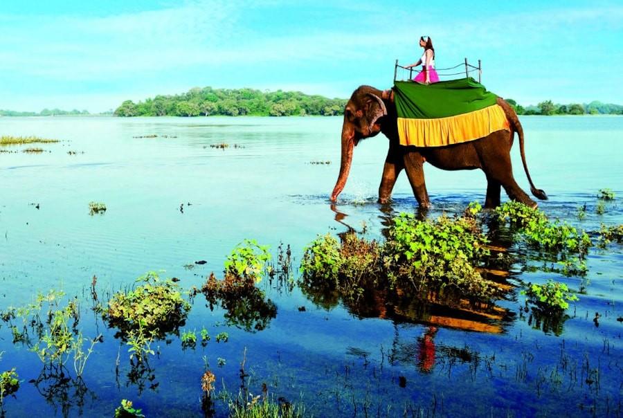 Слон на о. Шри - Ланка