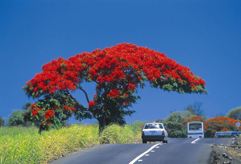 Безопасность в Маврикии